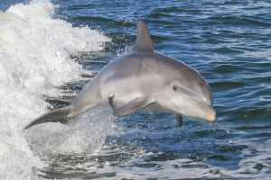 Noosa Oceanrider Scenic Dolphin Safari - Accommodation Yamba
