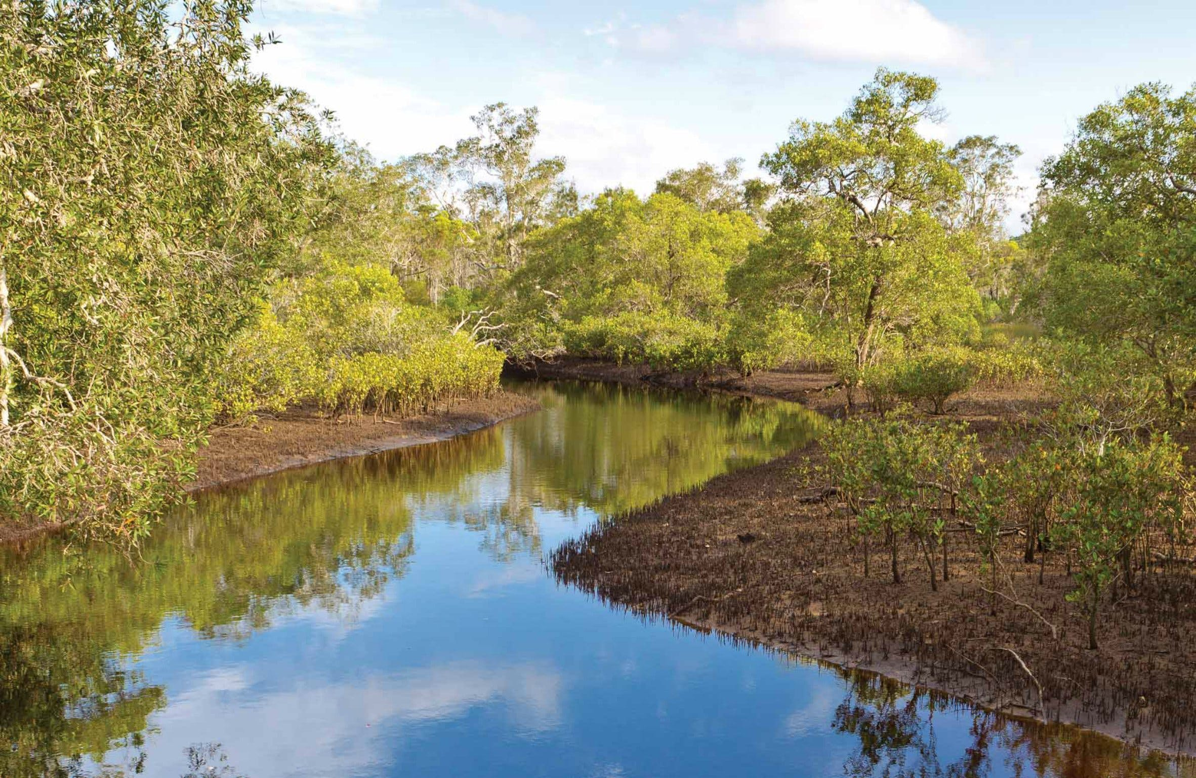 Canoe Evans River Paddle Route - Accommodation Yamba