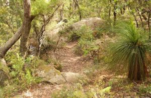 Mount Carnarvon Walking Track - Accommodation Yamba