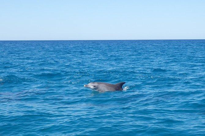Noosa Wild Dolphin Safari - Accommodation Yamba