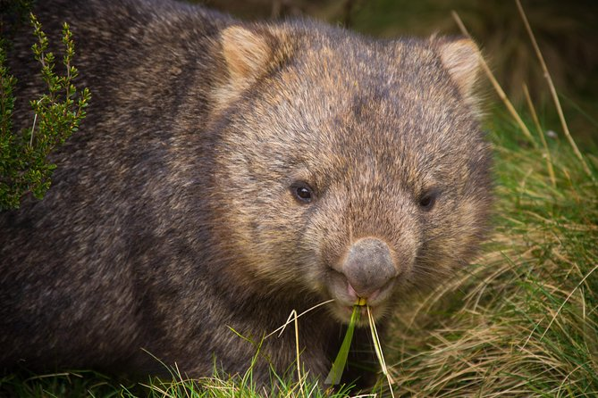 Cradle Mountain Wildlife Spotting after Dark - Accommodation Yamba