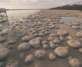 Lake Clifton Thrombolites - Accommodation Yamba
