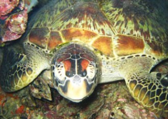 Adrenalin Snorkel and Dive - Accommodation Yamba