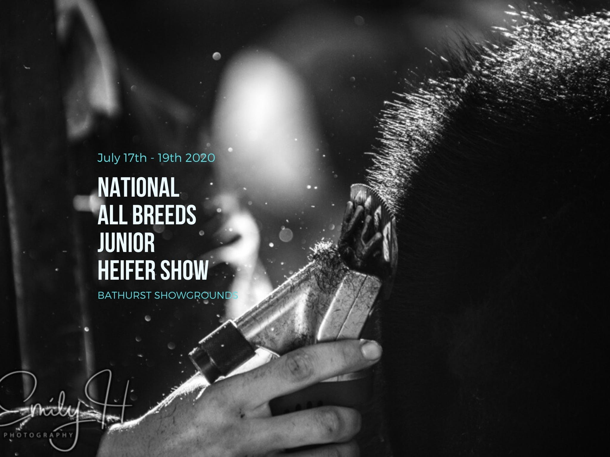 National All Breeds Junior Heifer Show - Accommodation Yamba