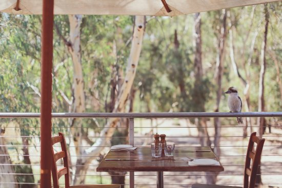 Morrisons Winery  Restaurant - Accommodation Yamba