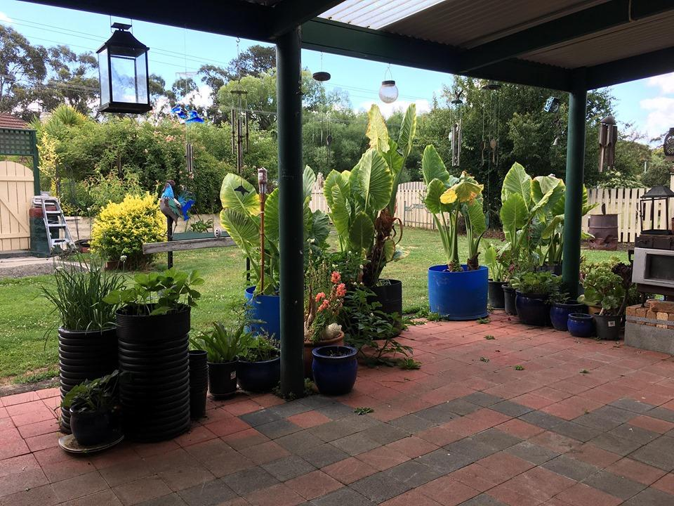 Blue Wren Bungalow - Accommodation Yamba